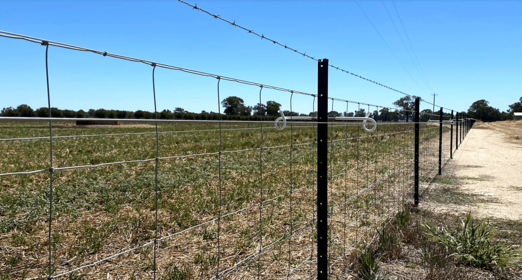 Wire fence in a paddock. Electric fence with a barbed wire on top.